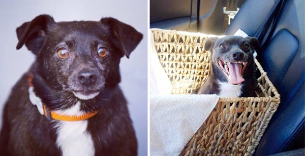 14 before and after pictures that will melt your hearth adopt dont shop 11