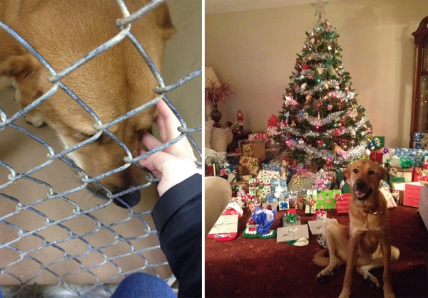 14 before and after pictures that will melt your hearth adopt dont shop 12