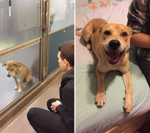 14 before and after pictures that will melt your hearth adopt dont shop 13