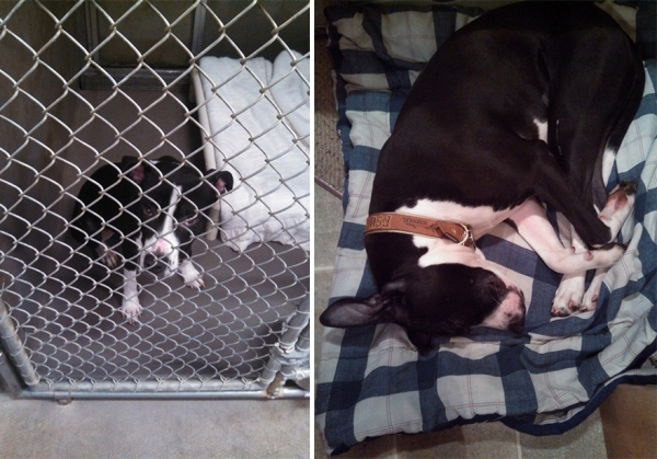 14 before and after pictures that will melt your hearth adopt dont shop 14