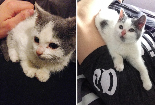 14 before and after pictures that will melt your hearth adopt dont shop 3