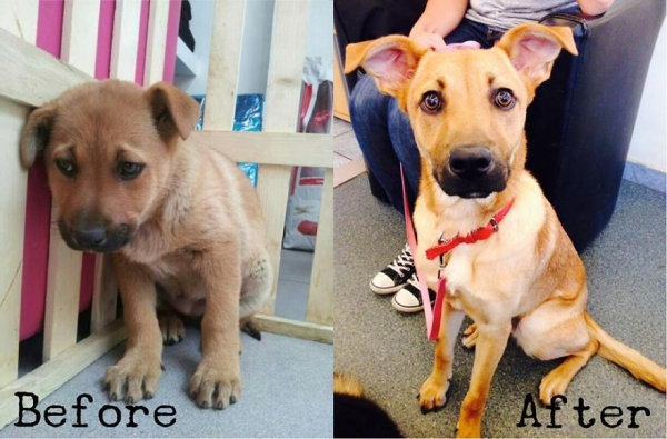 14 before and after pictures that will melt your hearth adopt dont shop 4