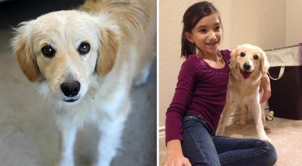 14 before and after pictures that will melt your hearth adopt dont shop 5