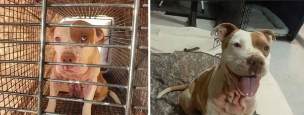 14 before and after pictures that will melt your hearth adopt dont shop 6