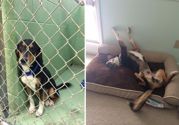 14 before and after pictures that will melt your hearth adopt dont shop 8