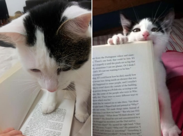 14 cats that are sure your attention is misplaced 3