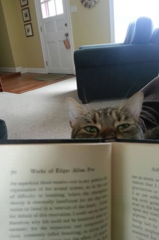 14 cats that are sure your attention is misplaced 8