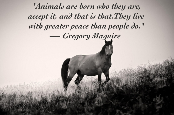 14 inspiring animal quotes that will put things in - Animal pak motivational quotes ...