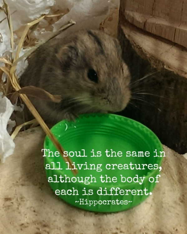14 inspiring animal quotes that will put things in perspective 12