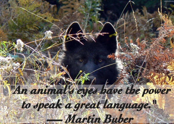 14 inspiring animal quotes that will put things in perspective 7
