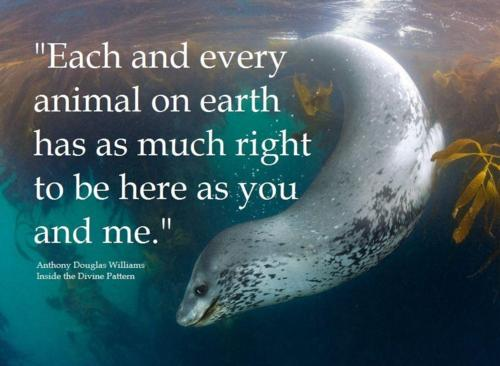 14 Inspiring Animal Quotes That Will Put Things in Perspective ... Zoo Animals Toys