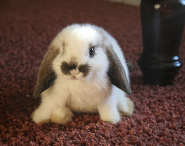 14 pictures of the sweetest little bunnies 10