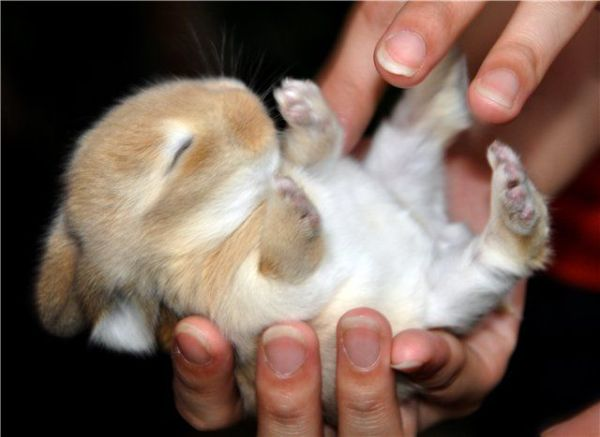 14 pictures of the sweetest little bunnies 11