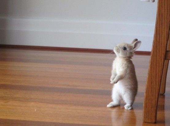 14 pictures of the sweetest little bunnies 12