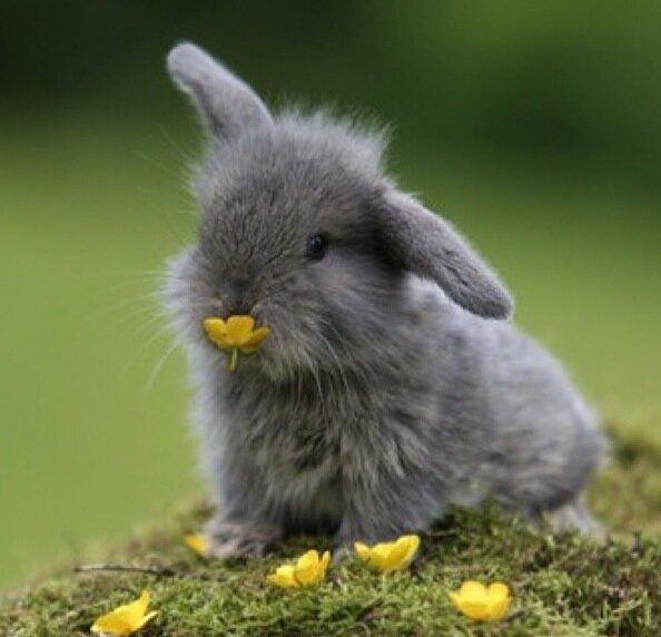 14 pictures of the sweetest little bunnies 13