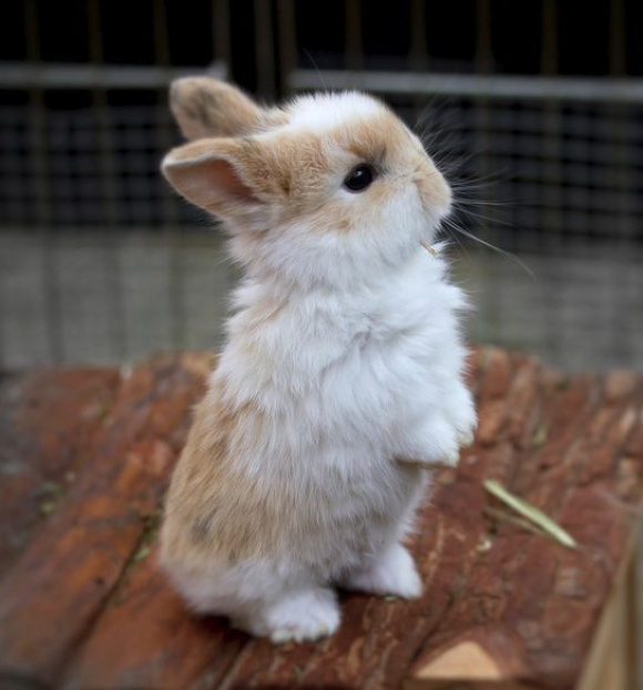 14 pictures of the sweetest little bunnies 5