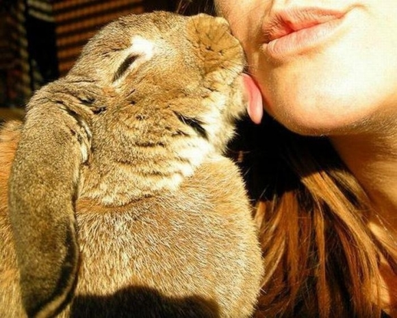 14 pictures of the sweetest little bunnies 7