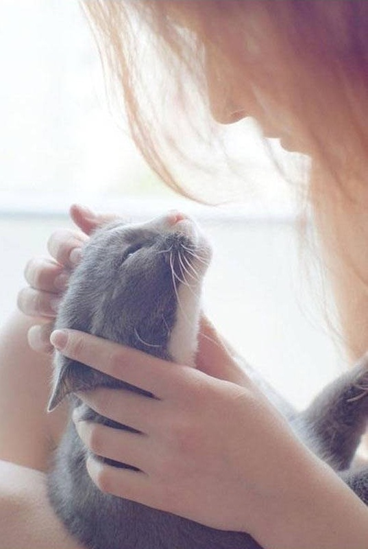 15 animals that enjoy every bit of your attention 10