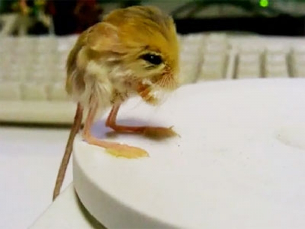 15 cutest animals of the week 10