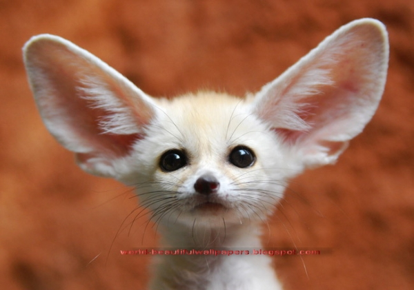 15 cutest animals of the week 5