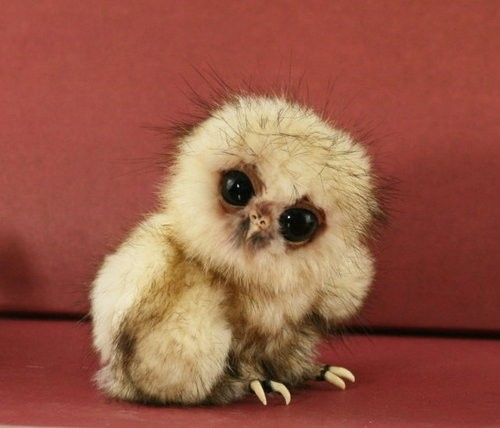 15 cutest animals of the week 9