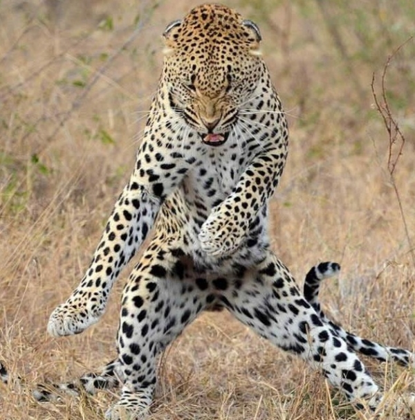 16 animals with some really slick moves 10