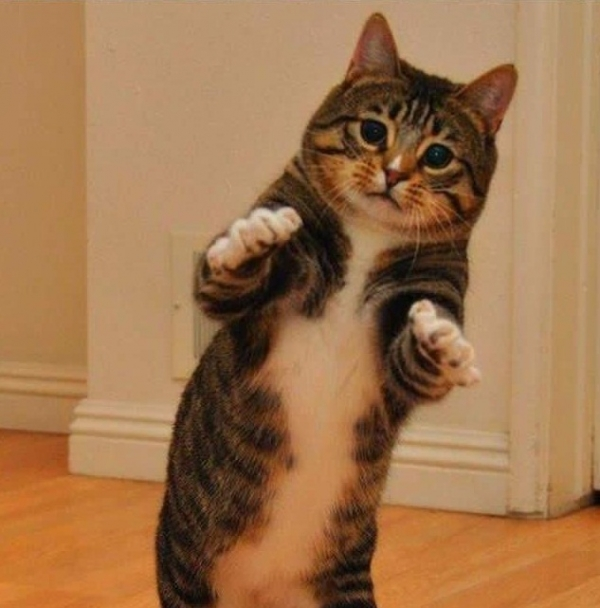 16 animals with some really slick moves 11