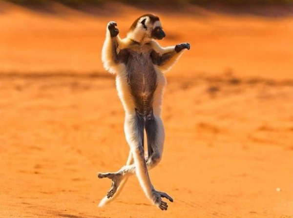 16 animals with some really slick moves 12