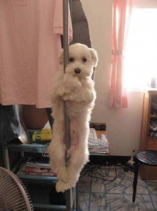 16 animals with some really slick moves 14