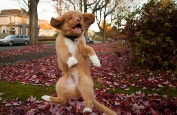 16 animals with some really slick moves 15