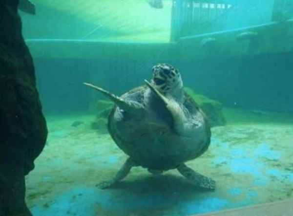 16 animals with some really slick moves 16