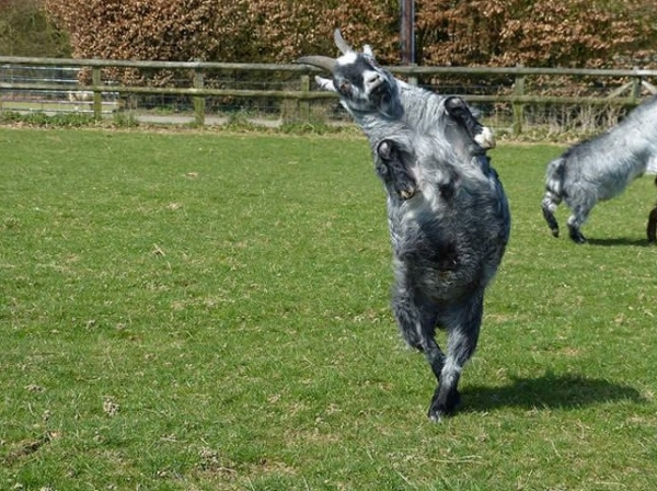 16 animals with some really slick moves 6