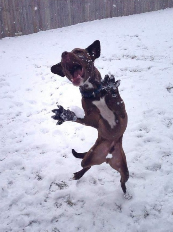 16 animals with some really slick moves 7