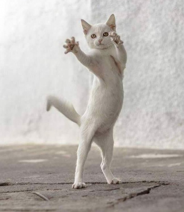 16 animals with some really slick moves 8