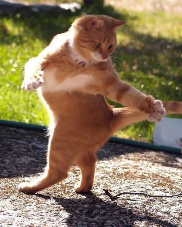 16 animals with some really slick moves 9