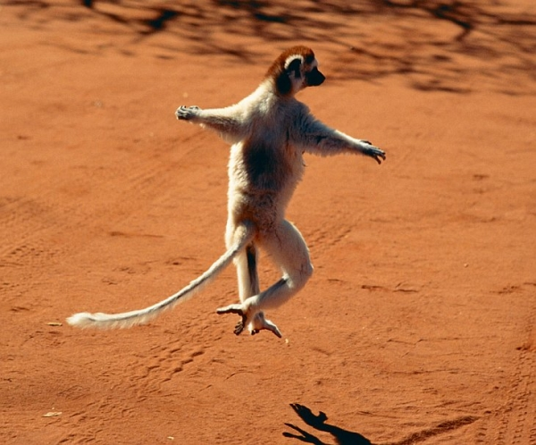 17 animals with some serious moves 12