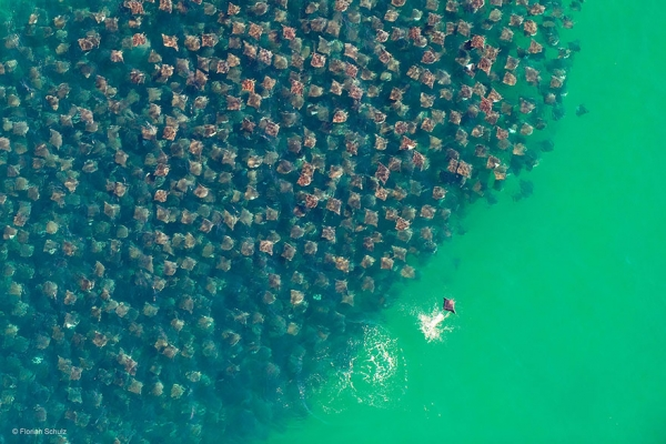 17 aweinspiring animal migrations 1