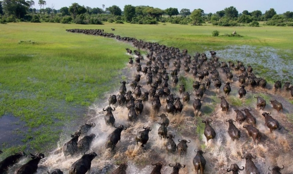 17 aweinspiring animal migrations 16