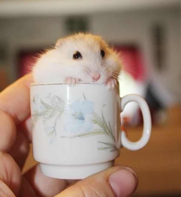 17 cups of cuteness coming right up 1