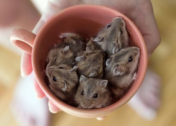 17 cups of cuteness coming right up 10
