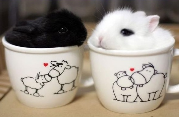 17 cups of cuteness coming right up 14