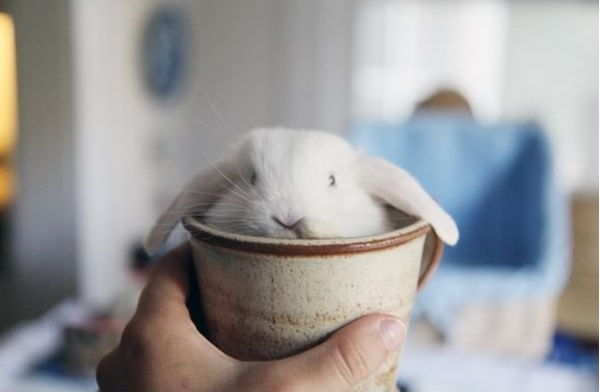 17 cups of cuteness coming right up 16