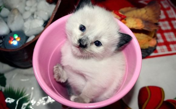 17 cups of cuteness coming right up 17