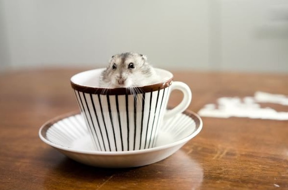 17 cups of cuteness coming right up 4