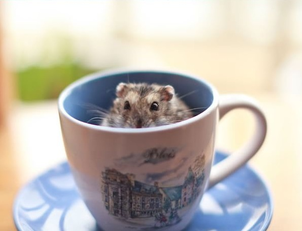 17 cups of cuteness coming right up 9