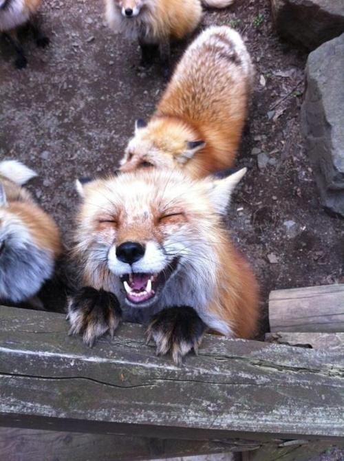 17 smiling animals to start your day 10