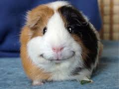 17 smiling animals to start your day 11