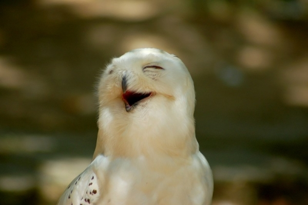 17 smiling animals to start your day 12