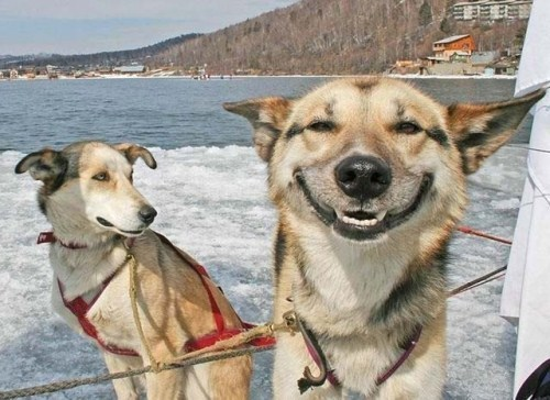 17 smiling animals to start your day 14