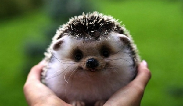 17 smiling animals to start your day 15